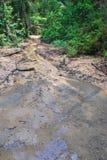 Regiones pantanosas contaminadas Imagen de archivo libre de regalías