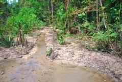 Regiones pantanosas contaminadas Foto de archivo libre de regalías
