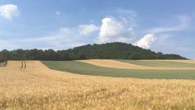 In regioni montane della Boemia centrali archivi video