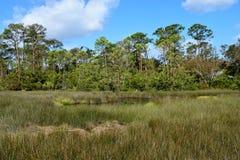 Regioni paludose di Florida Fotografia Stock Libera da Diritti