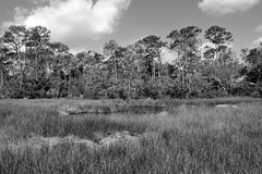 Regioni paludose di Florida in bianco e nero Immagine Stock