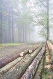 Registra gli alberi Fotografia Stock