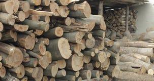 Registración de la madera Corte recientemente los registros de madera del árbol llenados para arriba Almacenamiento de madera par almacen de video