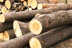 registrar Árvore das coníferas imagem de stock