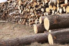 registrar grupo Floresta fotografia de stock