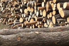 registrar grupo Floresta imagem de stock