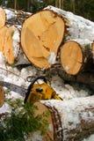 Registrazione di inverno Fotografia Stock