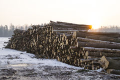 registreren De winterzonsopgang over een stapel van logboeken stock fotografie