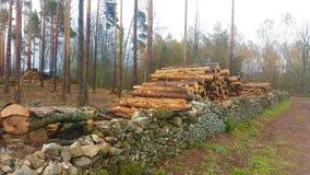 Registreren van bomen in een eiken bos royalty-vrije stock afbeeldingen