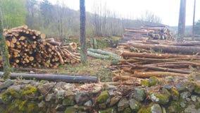 Registreren van bomen in een eiken bos stock afbeeldingen