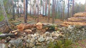 Registreren van bomen in een eiken bos stock foto's