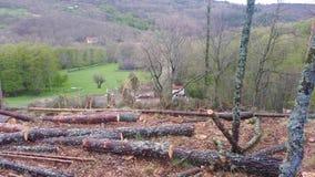 Registreren van bomen in een eiken bos royalty-vrije stock afbeelding