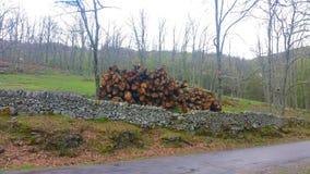 Registreren van bomen in een eiken bos stock afbeelding