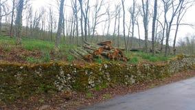 Registreren van bomen in een eiken bos stock fotografie