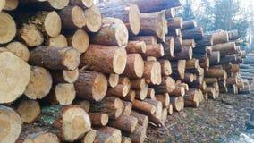 Registreren van bomen in een eiken bos royalty-vrije stock foto