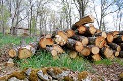 Registreren van eiken in het bos royalty-vrije stock afbeelding
