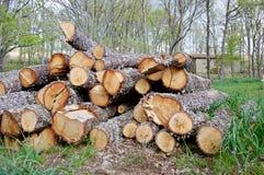 Registreren van eiken in het bos royalty-vrije stock foto's