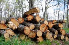 Registreren van eiken in het bos stock afbeelding