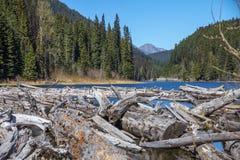 Registri l'inceppamento all'estremità est del lago Duffey, BC, il Canada Fotografia Stock