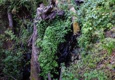 Registro caido, Eagle Creek, garganta de Columbia, Oregon Fotografía de archivo libre de regalías