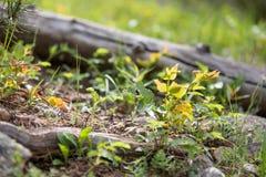 Registro caido rodeado por las hojas coloridas en Rocky Mountain National Park foto de archivo