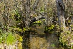 Registro caido sobre Forest Stream Imagenes de archivo