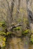 Registro caido sobre Forest Stream Fotos de archivo