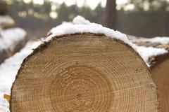 Registro cubierto con nieve Imagen de archivo