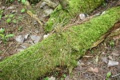 Registro cubierto de musgo que pone en el bosque Imágenes de archivo libres de regalías