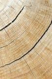 Registro de la madera dura Fotos de archivo