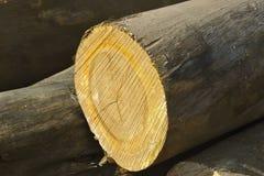 Registro de madera Imagenes de archivo