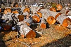 Registro de madera Foto de archivo