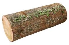 Registro de madera Foto de archivo libre de regalías