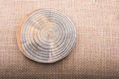 Registro de madera cortado en pedazos finos redondos Fotografía de archivo