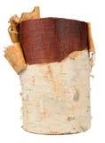 Registro de madera de abedul aislado en el fondo blanco Imagen de archivo libre de regalías