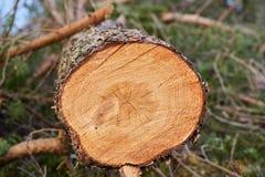 Registro de madera del grano Foto de archivo