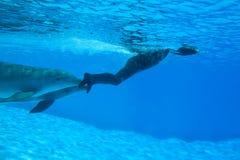 Registro de Mondial em Freediving-Simone Arrigoni Fotografia de Stock Royalty Free