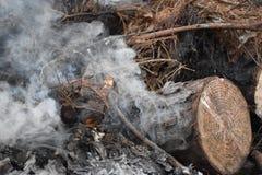 Registro de Smokey fotografía de archivo libre de regalías