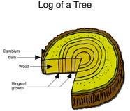 Registro de un árbol Foto de archivo