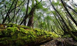 Registro del bosque Imagen de archivo libre de regalías