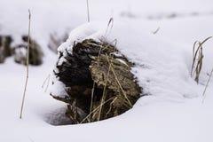 Registro hueco nevado Imágenes de archivo libres de regalías