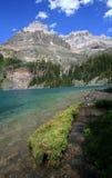 Registro Mossy no lago O'Hara Imagens de Stock