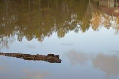 Registro que flota en el lago Foto de archivo