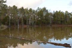 Registro que flota en el lago Imagen de archivo libre de regalías