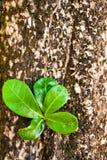 Registro viejo con el nuevo lanzamiento y las hojas verdes frescas, Imagen de archivo