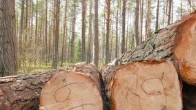 Registros aserrados del pino almacen de metraje de vídeo