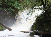Registros caidos sumergidos parcialmente por un bosque cerca de Ucluelet, Columbia Británica de la cascada que rabia bajo la lluv fotos de archivo