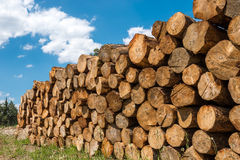 Registros crudos de madera de pino Foto de archivo libre de regalías