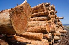 Registros crudos de registración de madera de la madera de construcción de la industria de la madera apilados Foto de archivo libre de regalías