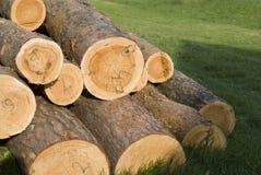 Registros da árvore foto de stock royalty free